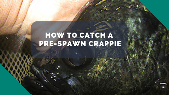 How to catch a prespawn crappie